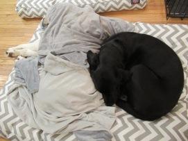Milo and Kiki's nap