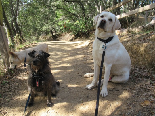 Milo, Happy and Blue on the 680 Trail